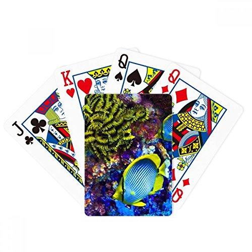 Bunte Meeresfische, Wissenschaft, Natur-Bild, Pokerspiel, magisches Kartenspiel