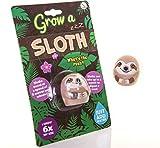 Boxer Gifts BB5224Sloth Grow Your Own, Wachsendes Faultier, Spielzeug, das bei Wasser größer Wird