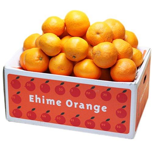 「訳あり愛媛はるみ5×2」訳あり品 愛媛はるみ10kg(5kg×2箱)安心光センサー選果合格品 デコくん(通称デコポン)の兄弟分,はるみみかん,はるみオレンジ