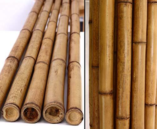 Bambus karamellfarben 200cm mit Durch. 5-6cm, Hitze Behandlung im Karbid Ofen von Bambus-Discount - Bambus Rohr Bambus Latten farbige Bambusrohre Bamboo