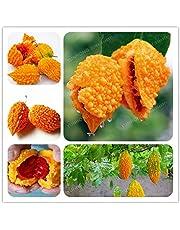 ScoutSeed 10 Unids Lama Semillas De Uva Deliciosa Fruta Saludable Balsam pera Fruta Vegetal NUEVO