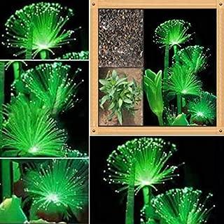 Best emerald fluorescent flower Reviews