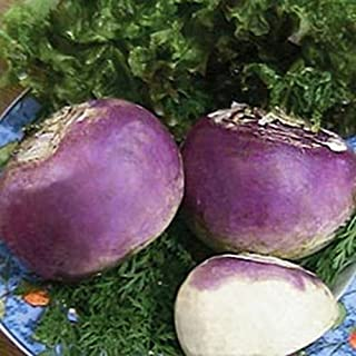 Best rutabaga plants for sale Reviews