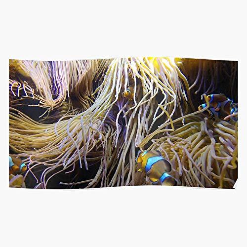 chicwish Orange Yellow Clownfish Fish Anemone Plymouth Aquarium Coral Das eindrucksvollste und stilvollste Poster für Innendekoration, das derzeit erhältlich ist