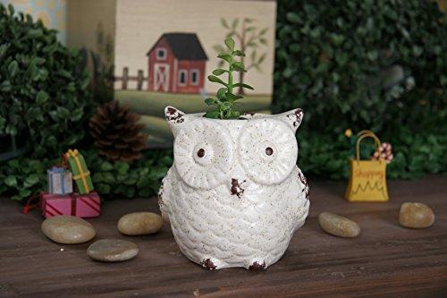 Smart Art Pot de fleurs en céramique en forme d'éléphant pour décoration de jardin ou de maison (hibou)
