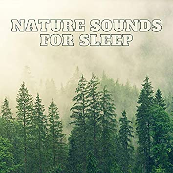 Natural Forest Sounds, Birds Chirping, Relaxing Forest Sounds for Sleeping