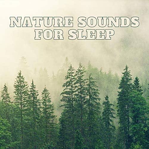 Nature Sounds Nature Music, Nature & Rainforest Sounds Collective & Sleep Sounds of Nature