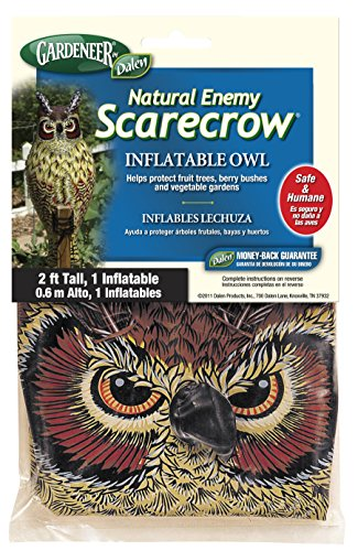 Best inflatable owl for 2021
