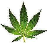 1art1 Cannabis - Hanf Blatt Wand-Tattoo Aufkleber