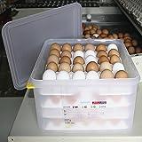 Araven 962110 - Recipiente de plástico para danzas de huevo, 120 capacidad, 35,4 cm x 32,5 cm x 20 cm