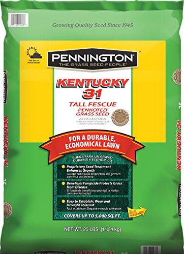 Pennington Kentucky 31 Tall Fescue Grass Seed, 25 LB