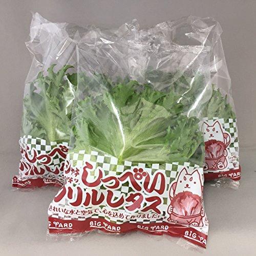 国産サラダ野菜 水耕栽培 しっぺいフリルレタス100g×40袋入り