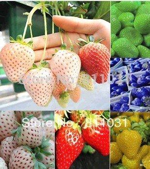 12 sortes fraise graines (rouge, bleu, vert, jaune, blanc, noir) les graines de Seasons 12 Packs Fruit Bonsai bricolage