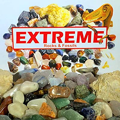 Extreme Rock & Fossil kit Including Huge Megalodon Shark Tooth shard, Meteorite Fragment, Herkimer Diamond and 3 lbs Total Rocks and Fossils.