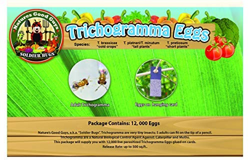 NaturesGoodGuys - Trichogramma Eggs on Hanging Cards (30 Squares - 100,000 Eggs)