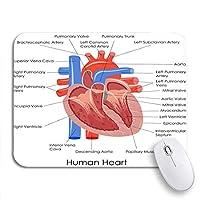 NINEHASA 可愛いマウスパッド 解剖図の解剖学人間の心臓の解剖学体の筋肉器官滑り止めラバーバッキングマウスパッドノートブックコンピュータマウスマット