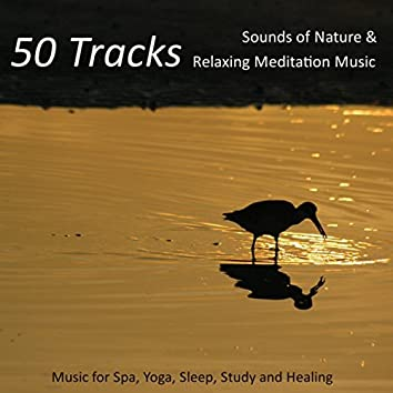 50 Tracks - Sounds of Nature & Relaxing Meditation Music for Spa, Yoga, Sleep, Study and Healing