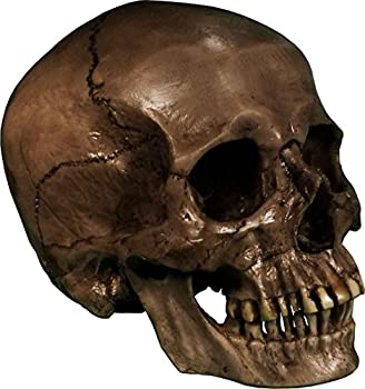 Authentic Life Size Replica Aged Relic Human Skull Reproduction in Crypt Dust Grey Color #3020-3093 by Nose Desserts