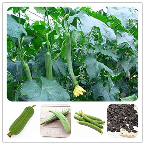 AGROBITS Très rare à long Luffa cylindrica Bonsai surdimensionné Serviette Gourd légumes Bonsai Balcon Jardin potager bio 10 Pcs: Potted MIX