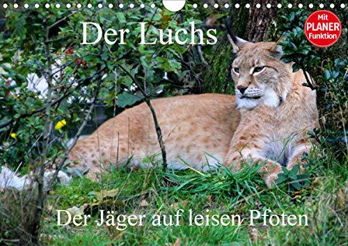 Der Luchs - Der Jäger auf leisen Pfoten (Wandkalender 2021 DIN A4 quer)