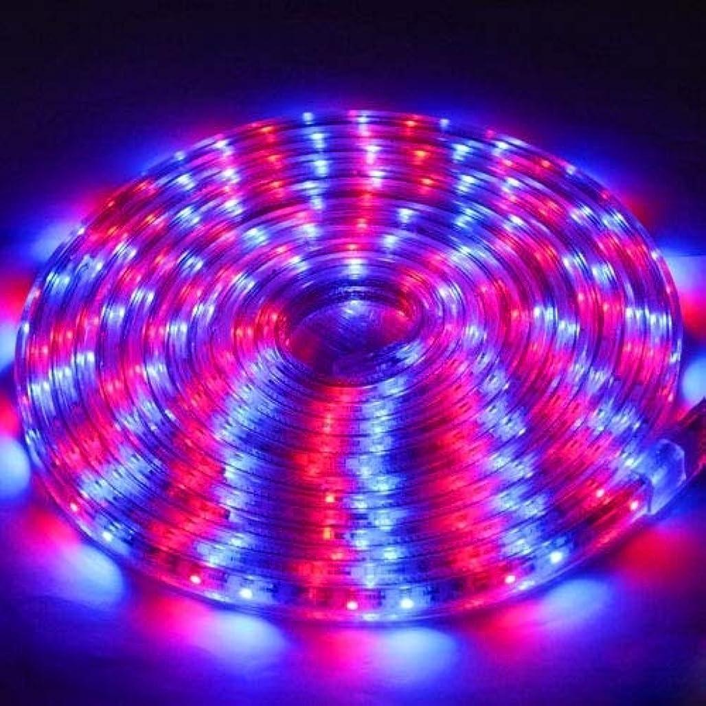 すぐに受け入れるフリンジXWZH クリスマスのための防水RGB LED 3528 SMDロープライトケーシング、60 LED/M、5メートル
