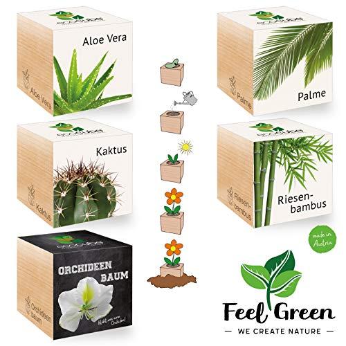 Ecocube Exotics Set met 5 soorten – 25% besparen in het pakket, planten in houten kubus, duurzaam cadeau-idee, Grow Your Own/kweekset, Made in Austria