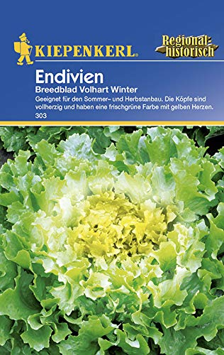 Salatsamen - Endivien Breedblad von Kiepenkerl