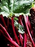 Portal Cool Paquete de semillas: 0,5 g (aprox. 50) Semillas de ruibarbo Victoria...