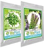 BIO Basilico & Issopo - Set di semi di piante di erbe - interno/esterno...