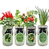 Environet Hydroponic Mason Jar Indoor Garden Seed Starter Kits - Zesty Salsa Growing Kits, Gardening Gift(Jalapeno Pepper, Cilantro, Cherry Tomato - Tiny Tim, Bunching Onion)