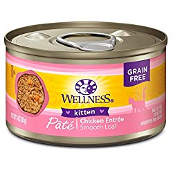 Wellness core canned kitten food