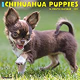 Just Chihuahua Puppies 2021 Calendar