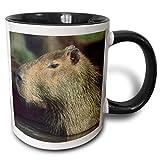 Capybara Wildlife, Llanos, Venezuela Tazza bicolore Kevin Schafer, 11 once, nero/bianco