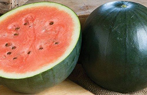 David's Garden Seeds Fruit Watermelon Sugar Baby 4756 (Red) 50 Non-GMO, Heirloom Seeds