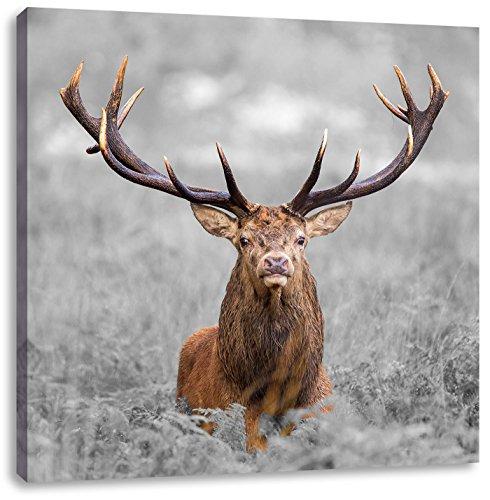 Pixxprint Großer Hirsch im Feld als Leinwandbild   Größe: 60x60 cm   Wandbild   Kunstdruck   fertig bespannt