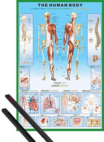 1art1 Der Menschliche Körper Poster (91x61 cm) Anatomie Inklusive EIN Paar Posterleisten, Schwarz