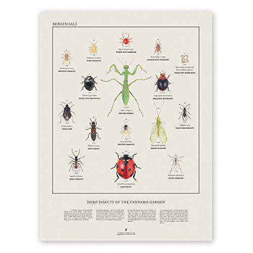 Goldleaf Beneficial Insects: Heros of The Cannabis Garden Art Print, Beneficial Insect Illustration Poster, Scientific Illustration Wall Art, Designed (18x24)