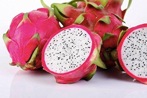 Exotic Tropical Dragon Fruit, Pitaya (Hylocereus Undatus) Organic Fruit Fresh Heirloom Seeds *White Flesh*