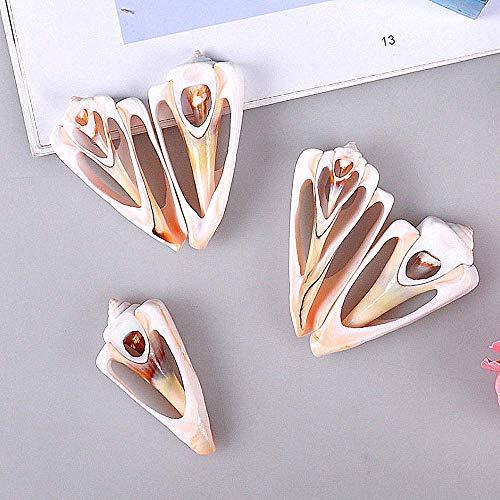DINGDA Conchiglia Shell Slice Triangolo Marca Lumaca Orecchini Fai da Te Collana Gioielli Shell Pittura Adesivi murali Accessori (6pcs)