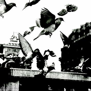 birds' flights