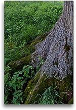 Premium textilduk 30 cm x 45 cm hög, september: I skuggan av de starka rötterna blommar så många krus.   Väggbild, bild på...