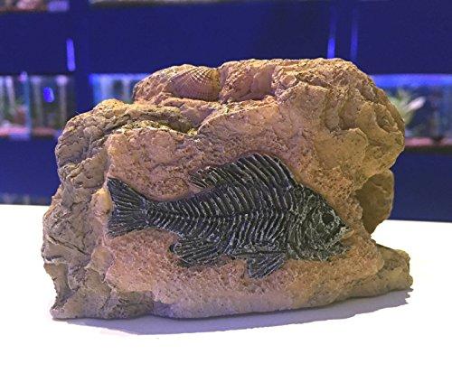 Klein Piranha Fossil Rock Cave Aquarium Ornament–Prähistorische Fisch Tank