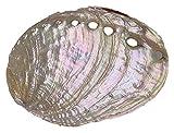 GaoF 1 Pieza de Concha de abulón Grande Concha náutica multiagujero Conchas de Boda en la Playa joyería DIY Shell Ocean Party Acuario Decoraciones para el hogar Accesorios Conch Shell Decor