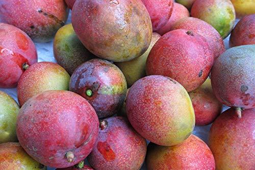 沖縄県産完熟ミニマンゴー1�s