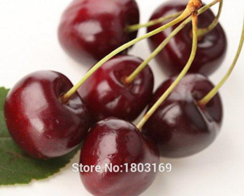 Vente chaude plantes organiques 10+ cerise graines graines de fruits plantes succulentes NON-OGM Livraison gratuite 3