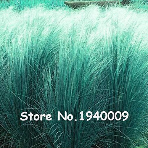 Homely 100 Stück/Beutel 13 Farben, mexikanisches Federgras, Stipa, wunderschön, winterhart, Ornamentgras, Pampas, Nadeln, Gras, Blumentöpfe
