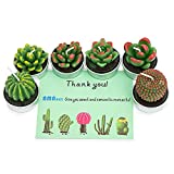AMASKY Handmade Delicate Succulent Cactus Candles for Birthday Party Wedding Spa Home Decoration. (6 in Pack)