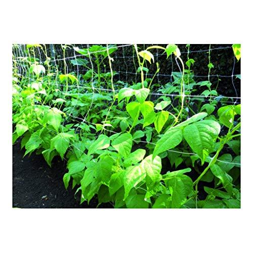 Frontière réseau grimpante pour légumes réseau de Frontière taille 1.50 x 100 mt 40527