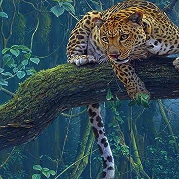 !Jaguar!