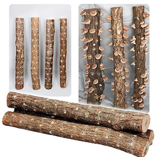 国華園 有用植物苗 しいたけ 完熟ホダ木 ホダキングしいたけ 90cm 1本 /21年秋商品